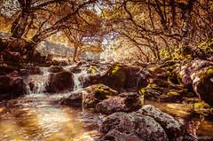 Water (pacoserrano91) Tags: trees naturaleza water rio river landscape agua rocks arboles andalucia cordoba campo cabra nava piedras navadecabra