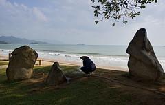 Zen Gardening (mysticislandphoto) Tags: travel viet vietnam nam nhatrang beach landscape