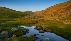 Meadow of Las Pozas (II)/Prado de las Pozas (II) (Modesto Vega) Tags: mountain rock landscape meadow prado fullframe roca d600 sierradegredos pradodelaspozas nikond600 piorno cambroo adenocarpushispanicus