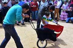 Osuna, Spain (LidyvN) Tags: park horses game training spain fiesta child dress dancing outdoor bull spanish learning andalusia bullfight toro ropa toreador fria picador matador fandi entrener
