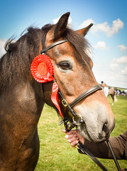 Best in Class (littlestschnauzer) Tags: animals equine emley show countryside winner best class first chesnut pretty equestrian west yorkshire uk england country red rosette horse horses prize beautiful brown