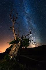 Guardianes del Cielo (Pablo RG) Tags: cantabria via lactea arbol estrellas