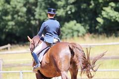 IMG_4951 (dreiwn) Tags: horse pony horseshow pferde pferd equestrian horseback reiten horseriding dressage reitturnier dressur reitsport dressyr dressuur ridingclub ridingarena pferdesport reitplatz reitverein dressurreiten dressurpferd dressurprfung tamronsp70200f28divcusd jugentturnier