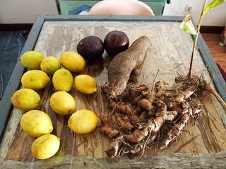 Nouméa, Citron, Avocat, Igname, Curcuma...