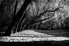 La danza (Emanuele190570) Tags: parco alberi natura mirano villabelvedere