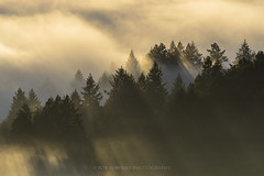 Mount Tamalpais (Bob Bowman Photography) Tags: california trees light sunset mist fog landscape nikon outdoor marin redwoods norcal hillside beams mounttamalpais