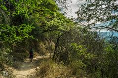 DSC03169 (Braulio Gmez) Tags: barrancadehuentitn biodiversidad caminoamascuala canyon canyonhuentitan faunayflora floresyplantas guadalajara jalisco mountainrange naturaleza sierra senderismo paisaje barrancadehuentitn barranca huentitn ixtlahuacandelro mxico guardianesdelabarranca