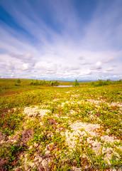 P fjllet (johanbe) Tags: nd110 longexposure mountain fjll linvallen slen sweden flowers color sky cloud moln himmel