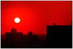 Sunset (Valter Patrial) Tags: londrina sunset sun pôrdosol sol silhuetas bird birds inexplore