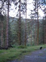 run (ztephen) Tags: scotland aberfoyle woods bobthedog runs