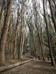 Wood Line (s__i) Tags: loverslane andygoldsworthy presidio sanfrancisco woodline