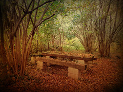 IMG_1383  forgotten place (pinktigger) Tags: wood italy fall nature leaves bench italia friuli auumn villalta