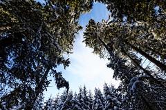 Baumkrone (Fuwa Photography) Tags: trees winter snow colors beautiful forest canon eos amazing furtwangen schwarzwald blackforest efs neukirch 60d 1018mm