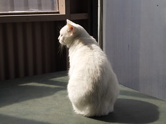 Mystic (universalcatfanatic) Tags: windows cats white 3 hot green window corner cat fence one 1 three sitting seasons top room screen plastic cover tub sit mystic screens