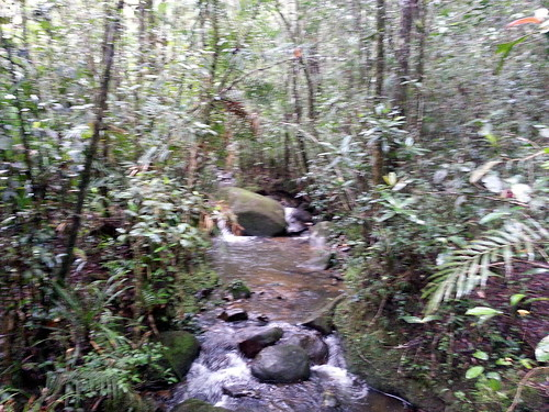 The big rock in the stream in the rainforest in the rain