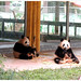 #264 Pandamonium.