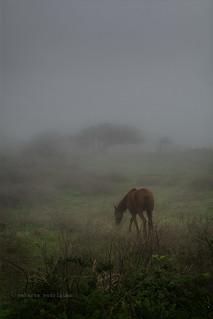 Caballo pastando en día de niebla