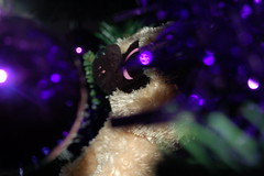 Princess Pug In The Tree (tybeaniebears) Tags: christmas dog cute green eye dogs eyes purple pug christmastree ty tinsel pugs baubles tybeaniebaby tyinc tybeanieboo