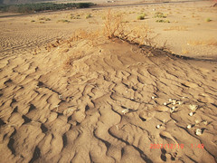 Sand Waves   (haidarism (Ahmed Alhaidari)) Tags: nature sand waves desert wind