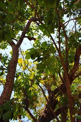 Bush at Mandorah Beach, Darwin (Markus Branse) Tags: trees tree bush australia australien bäume baum busch northernterritory mandorah ozeanien mandorahbeach australischerbusch