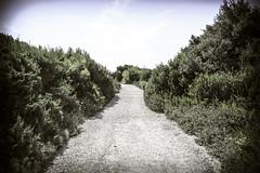 Unknown Road (Moretti Matteo) Tags: road sea summer italy sun fall texture mystery strada italia mare august unknown sole terra puglia gemelle orso stradina 2014 battuta sorelle