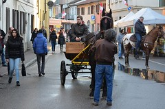 Carretto-  Once upon a time....cart drawn by an horse (Bruno Viganò) Tags: street city portrait horses people horse shot gente primo cart festa carretto cavalli cavallo santantonio pavese casorate altopavese