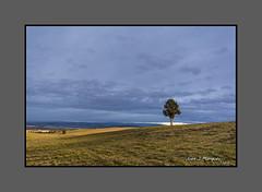 SABINA (Juan J. Marqués) Tags: azul rustico cielo campo atardeceres sabina teruel solitario arcillas