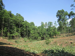 Clearcutting the pond site