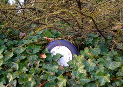 Perhaps time flew a little askew? (Ruth and Dave) Tags: green clock vancouver random mountpleasant ivy hedge shrub