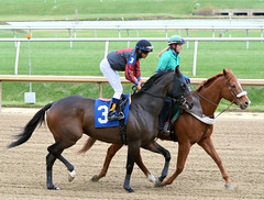 "2014-11-05 (37) r2 Victor Carrasco on #3 Q's Jack (JLeeFleenor) Tags: photos photography md laurelpark marylandracing marylandhorseracing jockey جُوكِي ""赛马骑师"" jinete ""競馬騎手"" dżokej jocheu คนขี่ม้าแข่ง jóquei žokej kilparatsastaja rennreiter fantino ""경마 기수"" жокей jokey người horses thoroughbreds equine equestrian cheval cavalo cavallo cavall caballo pferd paard perd hevonen hest hestur cal kon konj beygir capall ceffyl cuddy yarraman faras alogo soos kuda uma pfeerd koin حصان кон 马 häst άλογο סוס घोड़ा 馬 koń лошадь bay maryland"