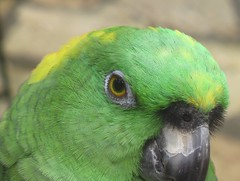 Close Up Look at the Parrot