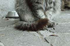 Tail and Paws (* Nicoletta Radice) Tags: italy cats animals cat portraits canon 50mm italia gato gatto gatti animale nicolettaradice