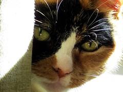kuhsi (gerben more) Tags: portrait home animal cat utrecht