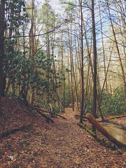 Trail. (tout_m) Tags: trees light red beautiful leaves forest river spring woods stream outdoor hiking kentucky daniel adventure trail national gorge lovely boone wandering redrivergorge