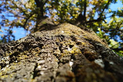 Tree Bark (Cmuozfernandez) Tags: arbol tree rama tronco hojas hoja leaf branch corteza trunk log light luz summer verano sky cielo blue azul