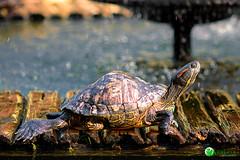 Acelerando (Rafael Arrud@) Tags: hdr photoshop acr photomatrix arte art tartaruga turtle jardimbotanico collor arruda rafaelarruda