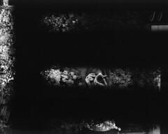 The Secret Garden (silentdeerphotos) Tags: old portrait people blackandwhite bw italy film girl analog vintage mediumformat model italia pentax kodak tmax secret oldschool bn scan hidden v verona voyeur portraiture blonde scanned vintagecamera epson mf 100 6x7 analogphotography 67 noemi humans biancoenero tmax100 v800 analogic kodaktmax100 kodaktmax filmphotography pentax6x7 pentax67 oldpentax blondegirl italiangirl thesecretgarden filmisnotdead epsonv800 buyfilmnotmegapixels