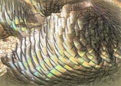 Turkey Feathers (Steve Taylor (Photography)) Tags: turkey feather shimmer art digital brown green yellow closeup newzealand nz southisland canterbury bankspeninsula bird texture overlapping