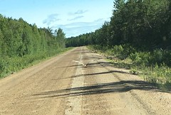 Two sandhill cranes flew up the road (Hwy 914),  northern Saskatchewan (Nancy's ~) Tags: saskatchewan sandhillcranes hwy914