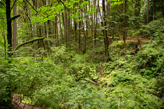 Hiking in Forest Park (Richtpt (Rich Uchytil)) Tags: trees green oregon portland us unitedstates hiking pdx forestpark 2016