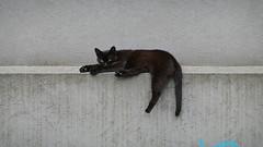 Kitty moment (Dragan*) Tags: cat kitten kitty animal pet blackcat pose portrait eyes wall texture outdoor street
