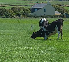 fieldwise (mishko2007) Tags: ireland 105mmf28