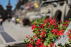 Historic City of Berne (*Capture the Moment*) Tags: 2016 bern berne blume bokeh brunnen drops elemente flower fountain schweiz sommer sonya7ii summer switzerland tropfen wasser water zeissbatis1885