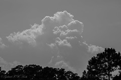 Sky & Cloud in Black and White (Gabriel FW Koch) Tags: scenic landscape storm fluffy telephoto lseries canon eos dof bw