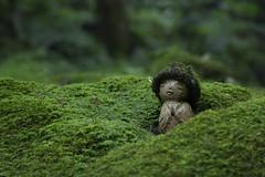 Moss Jizo in the Rain  (Patrick Vierthaler) Tags:               japan kansai kyoto ohara sanzenin sanzen moss garden moosgarten moos jizo steinbuddha buddha hat hut summer sommer grn green temple tempel buddhist buddhistischer rain regen
