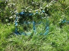 Blue Grass (ART NAHPRO) Tags: blue grass