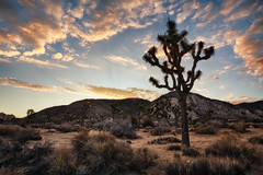 Early To Rise (Brian Truono Photography) Tags: california hdr highdynamicrange joshuatree joshuatreenationalpark mormon nps nationalpark nationalparkservice unitedstates clouds desert dusk evening exposureblending geology hills landscape morning mountains nature plant rock sky southwest spikes sunrise tree trees yucca us