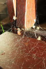 Web on Chair (Jon Pinder) Tags: canon powershot s100