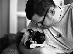 Pug cuddles! (Mark Hickford) Tags: pug monty mamiya m645 mediumformat 120 kodak 400 trix