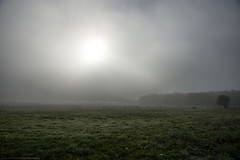 Misty morning... (CarolienCadoni..) Tags: sonyslta99 sal2470z mist misty fog horse horses farm earlymorning onstwedde groningen nederland netherlands holland